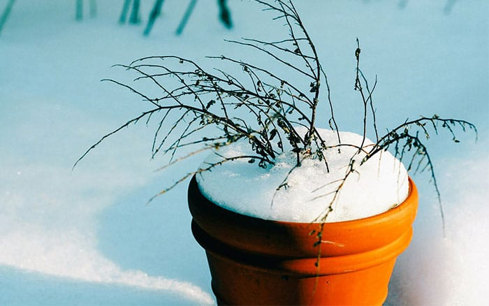 Plant Pot Flower Pots In Snow Winter Protection