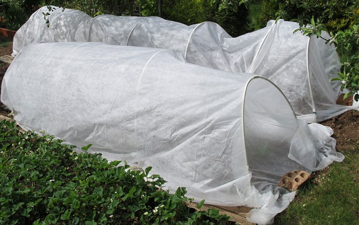 Protect Plants In Winter Cloches Cold Frames And Polytunnels