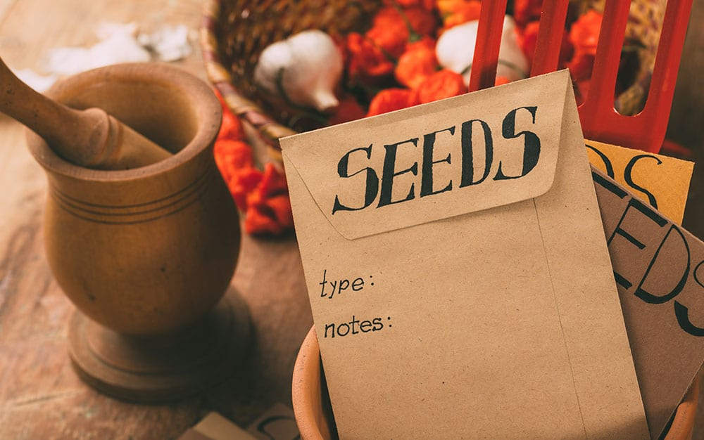 seeds-in-envelopes