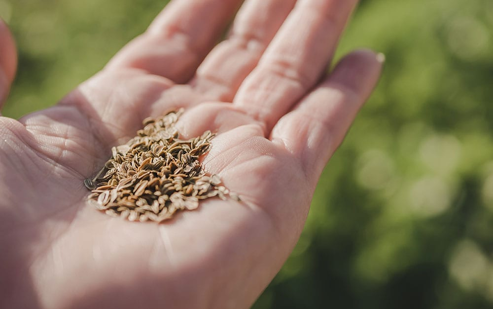 seeds-in-hand