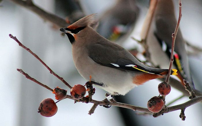 Winter birdwatching Which wild birds will visit your garden