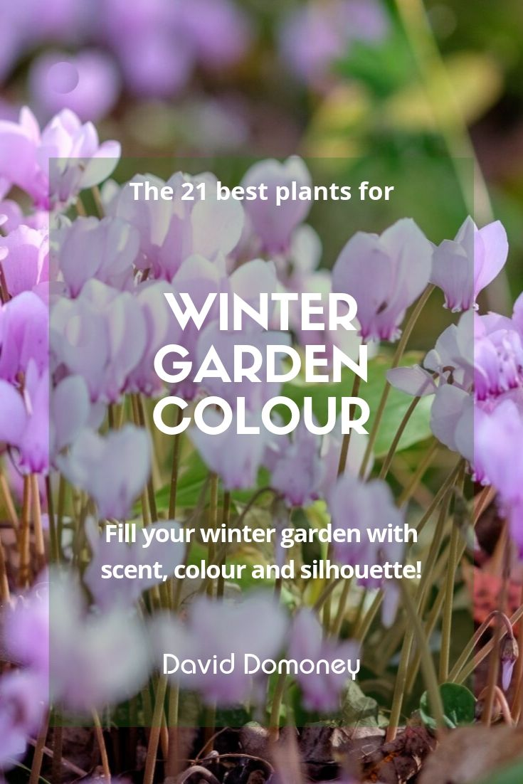 The best plants for winter garden colour - David Domoney