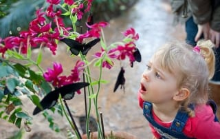 Girl looking at butterflies in the glasshouse at RHS Garden Wisley. RHS/Neil Hepworth