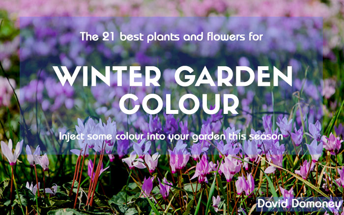 The 21 Best Plants For Winter Garden Colour David Domoney