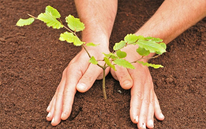 How to plant a tree in 3 easy steps The nononsense guide – Steps to Planting a Garden