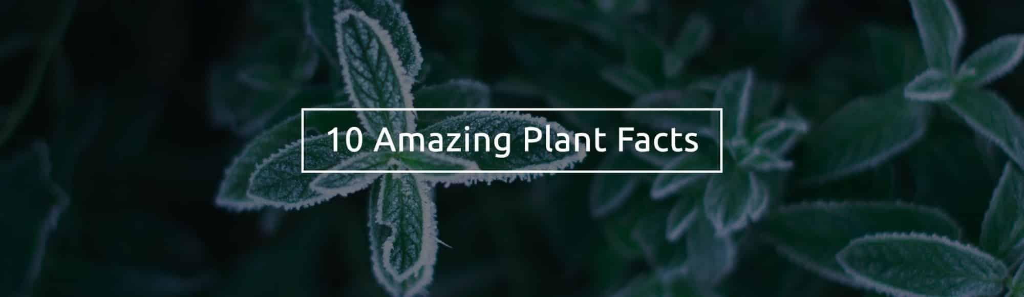 mood-lifting-plant-facts