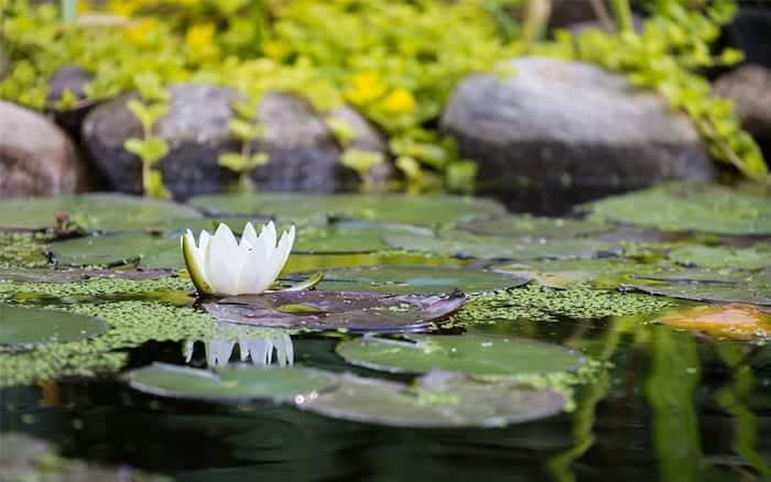 pond-how-to-build-a-garden-pond-wildlife-aquatics-and-fish