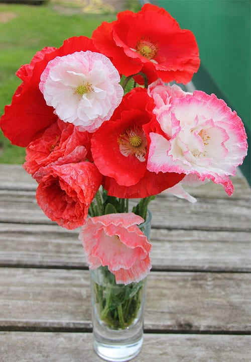 Poppy Falling In Love Seed Mix by Mr Fothergill's - New Plants 2016