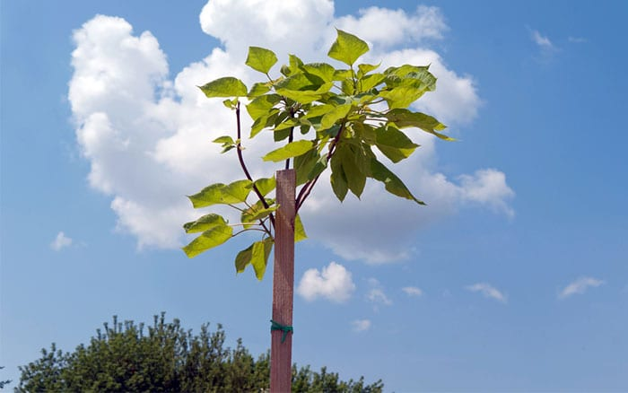 stake-a-tree-how-to-plant-a-tree