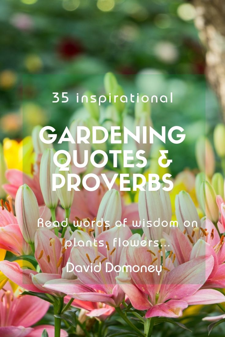 3 inspirational gardening quotes and famous proverbs