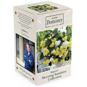 Begonia Morning Sunshine Collection: David Domoney for John Lewis