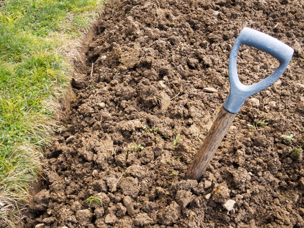 Gardening the best plants for clay soil grow in full for Soil for plants