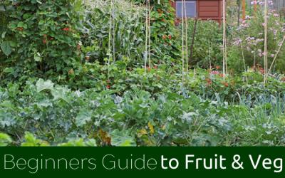 Growing Fruit & Veg