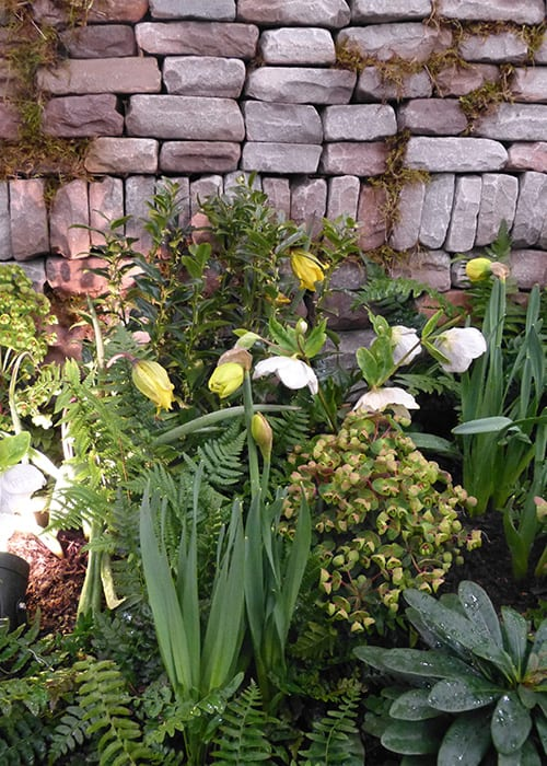 Spring plants and daffodils in front of a stone wall with moss - design details from the contemporary woodland garden at the Ideal Home Show by Askham Bryan College