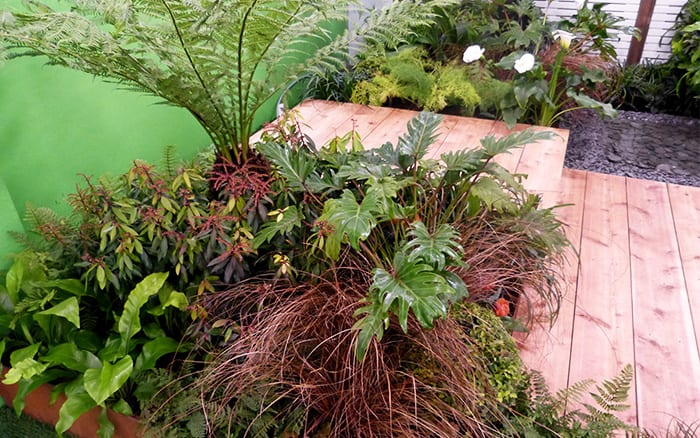 Capel Manor College tropical show garden including tree ferns, dark grasses and orange tulips