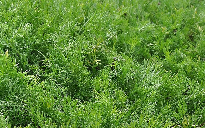 The Best Low Maintenance Plants For Easy Lawn Alternatives