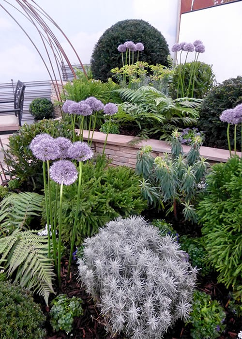 Stunning spherical plants for a border in Chichester College's Young Gardeners of the Year show garden. Includes clipped bay trees and alliums