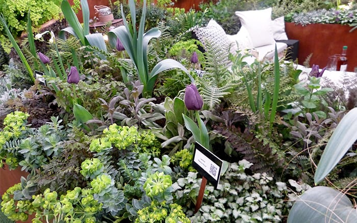 Planting in the show garden by Pershore College includes purple tulips and euphorbia - Young Gardeners of the Year show gardens