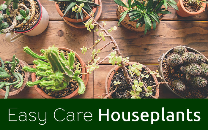 Easy Care Houseplants