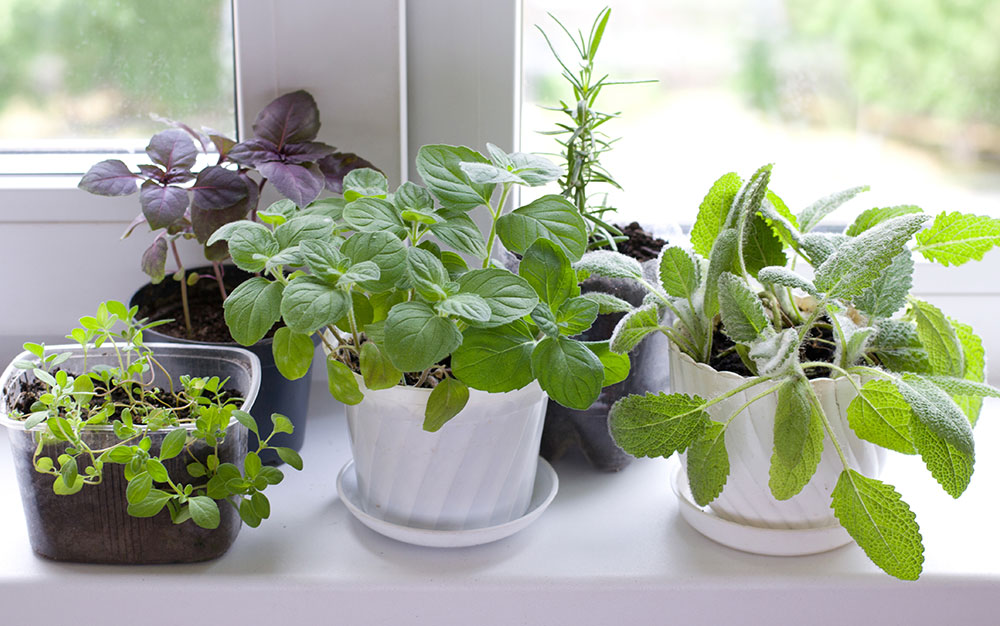 various-plants-windowsill