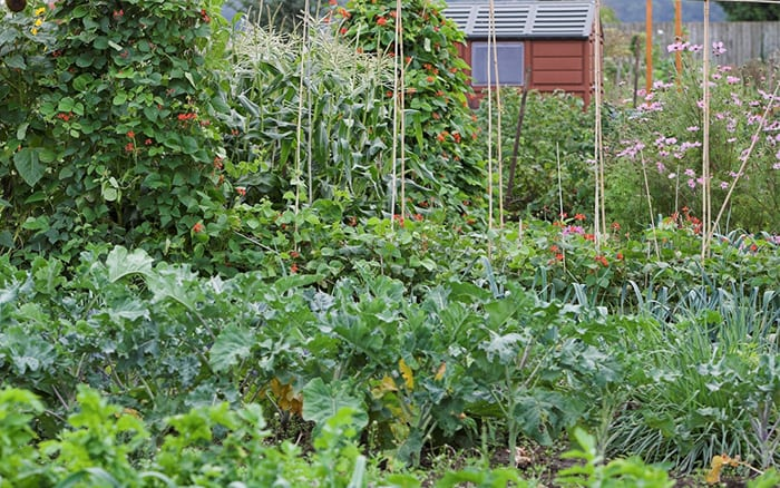 Complete Beginner's Guide to Growing Vegetables and Fruit