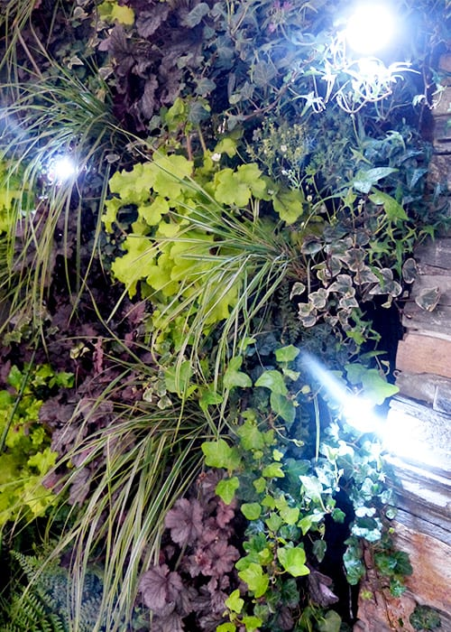 The green wall planter in Writtle College's Basement Garden show garden includes heucheras and grasses