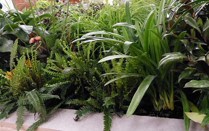 Writtle College Basement Garden show garden at the Young Gardeners of the Year Competition 2016. See all the finished gardens here