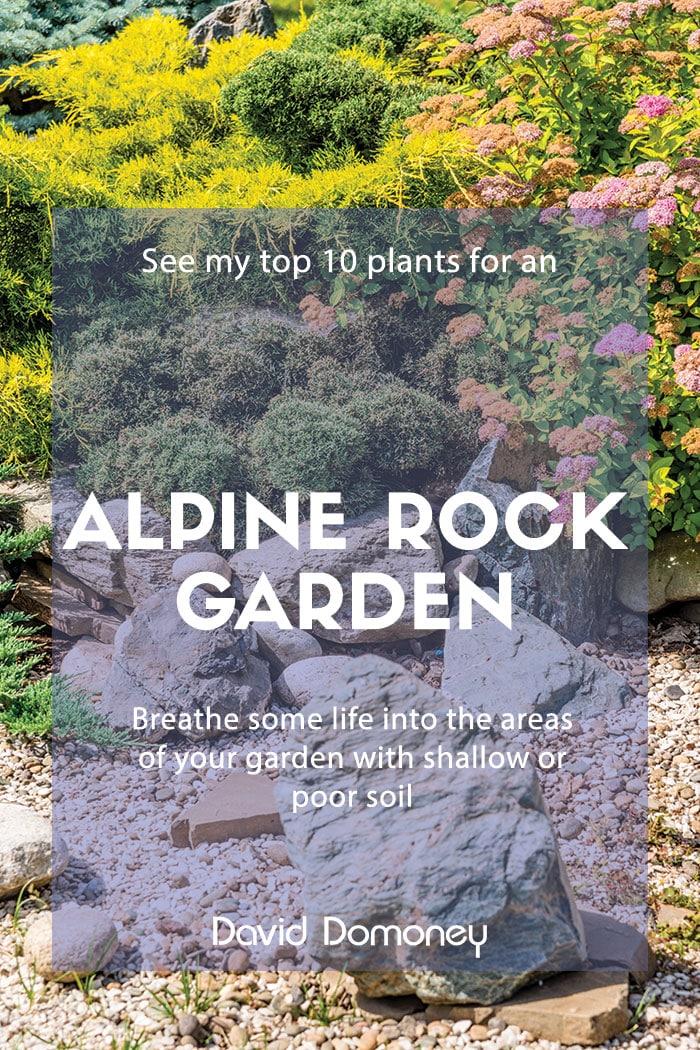 Alpine rockery garden