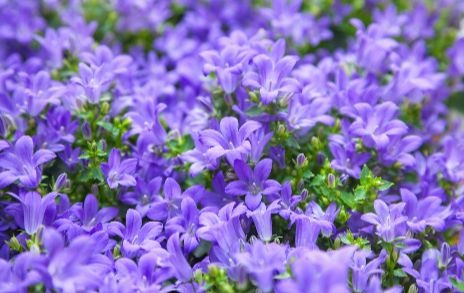 Annual Plants Mean, What Does Annual Bedding Plant Mean