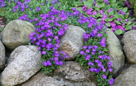 Top Plants For An Alpine Rock Garden David Domoney