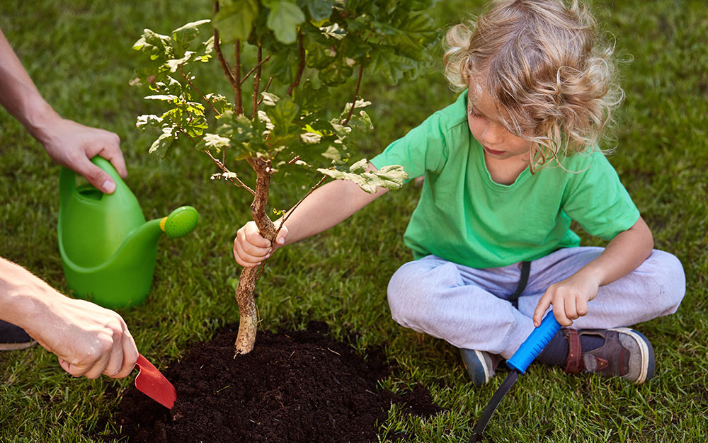 child-helping-plant-tree