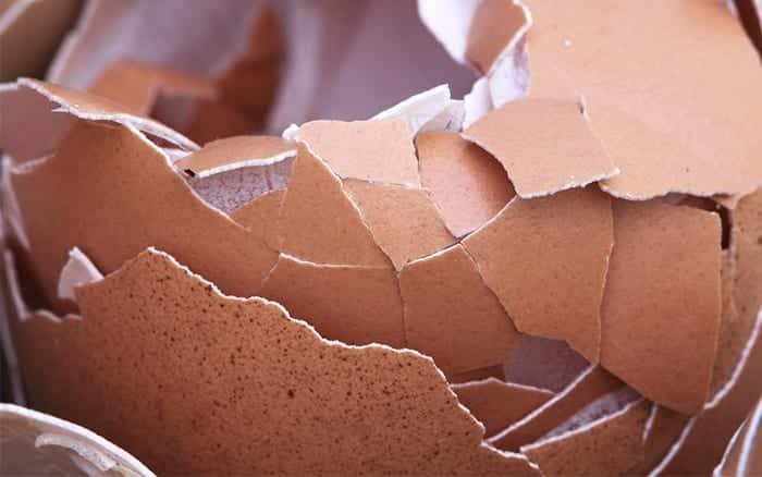 eggshells-using-everyday-items-in-the-garden-cheap-gardening-tips