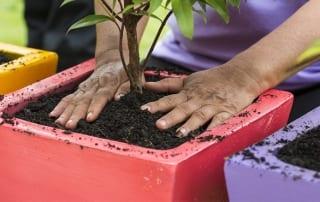 plant-a-tree-shrub-in-a-pot