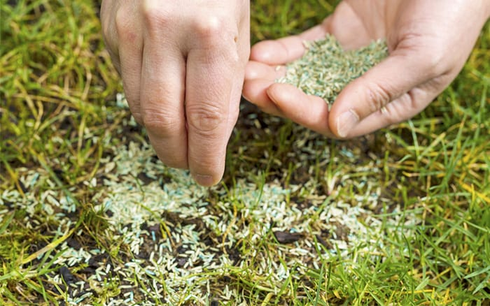 sow-grass-seed-lawn-repair-bare-patches-regrow-grass-seed