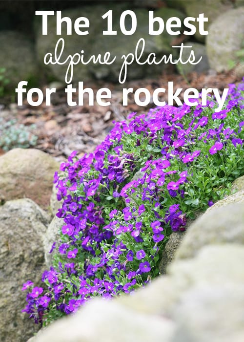 images of low maintenance gardens with Rockery Plants Top 10 Plants For An Alpine Rock Garden on Rain Gardens Bioswales besides Biodiversity 45517022 also Service Garden Walls furthermore Gardens moreover Cs 5ways Garden With Pond.