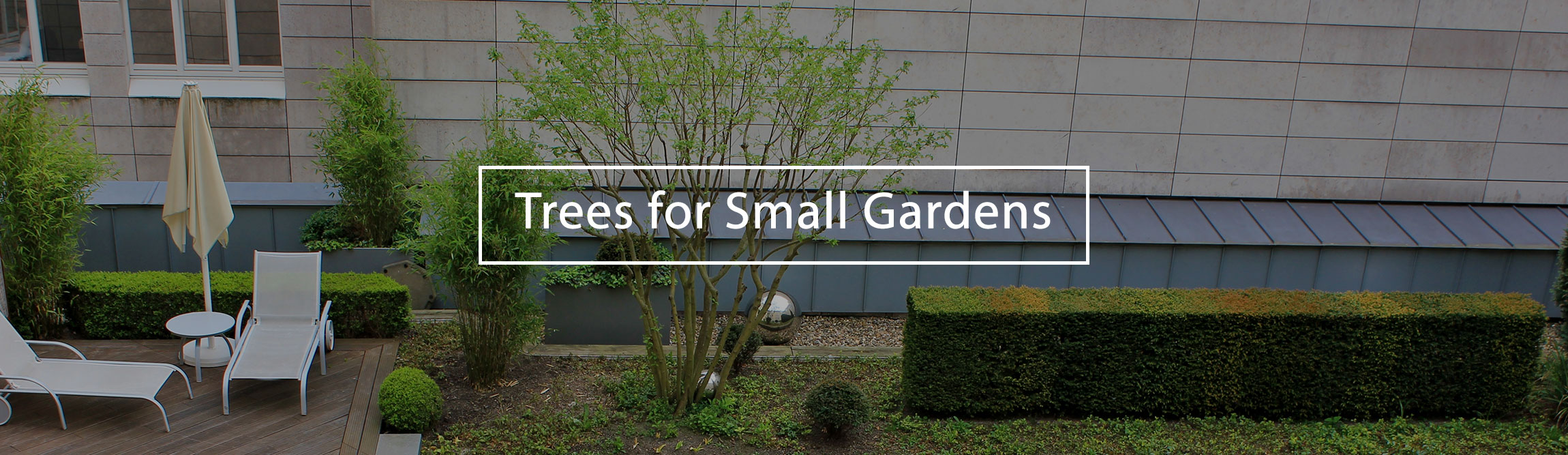 trees-for-small-gardens