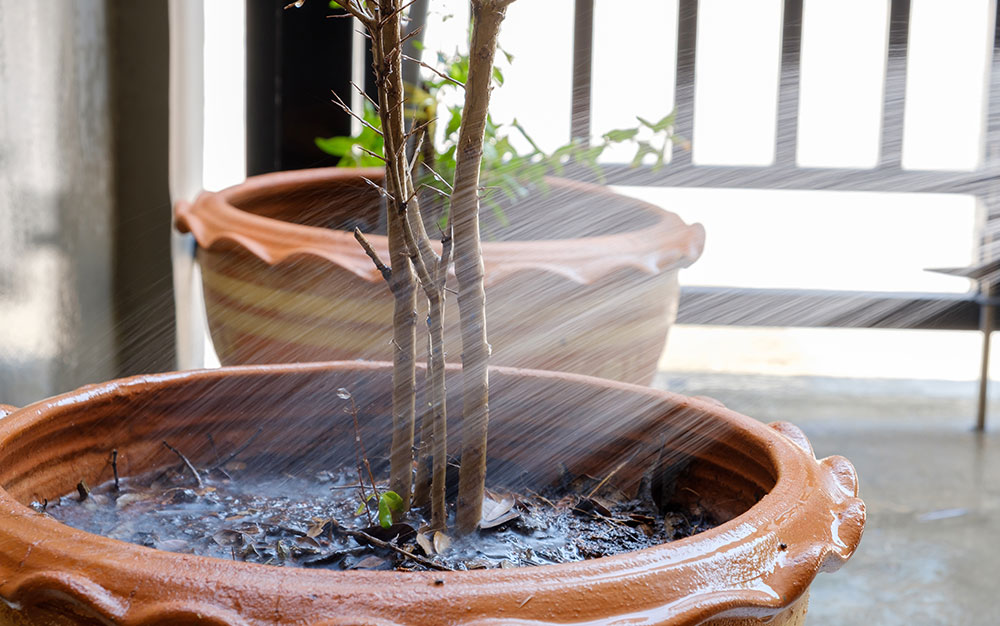 watering-potted-tree