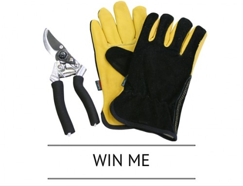 Competition Time! Win Premium Leather & Suede Glove and Secateur Set