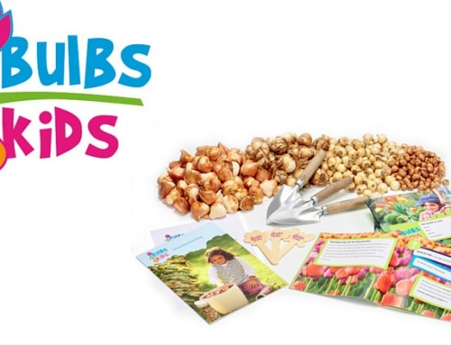 600 Free Flower Bulb Kits For Primary Schools