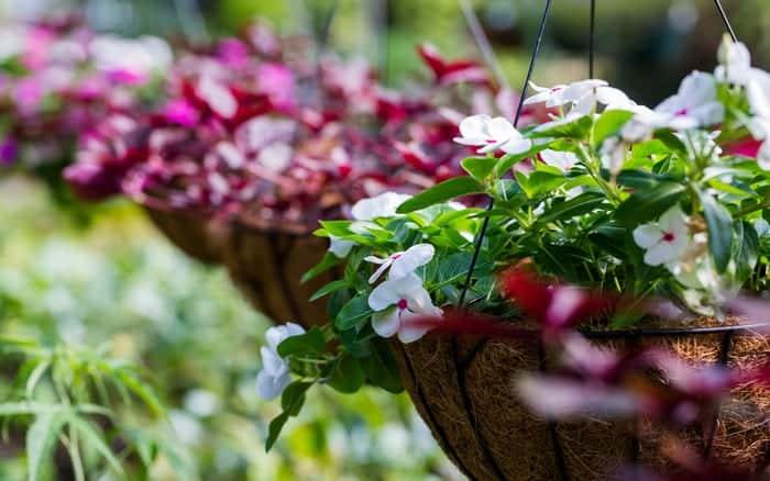 Flower Baskets Dublin : Hanging heaven perfect baskets made easy david