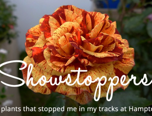 Showstoppers: 10 plants that stopped me in my tracks at Hampton