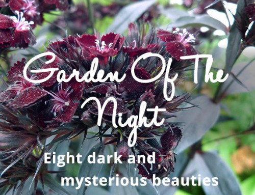 Garden Of The Night:
