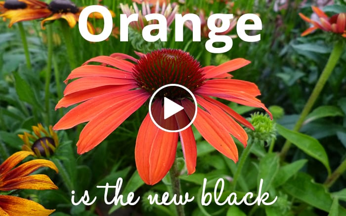 Oange is the new black play 2