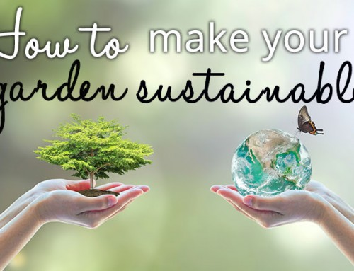 How to: make your garden more sustainable by saving and recycling
