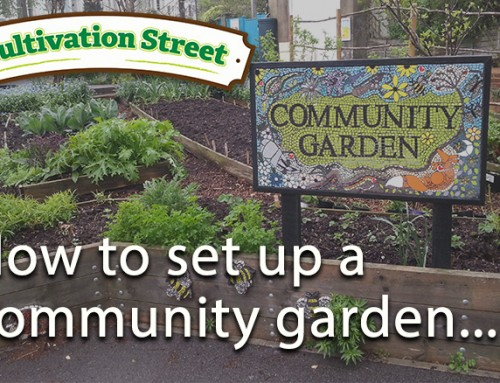 How to set up a community garden