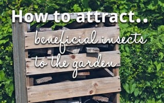 Attract beneficial insects to the garden