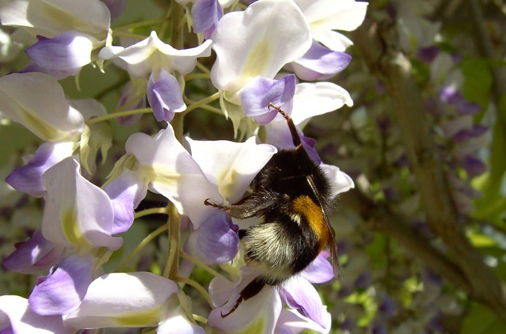 How to: make a bumblebee house in your garden - David Domoney