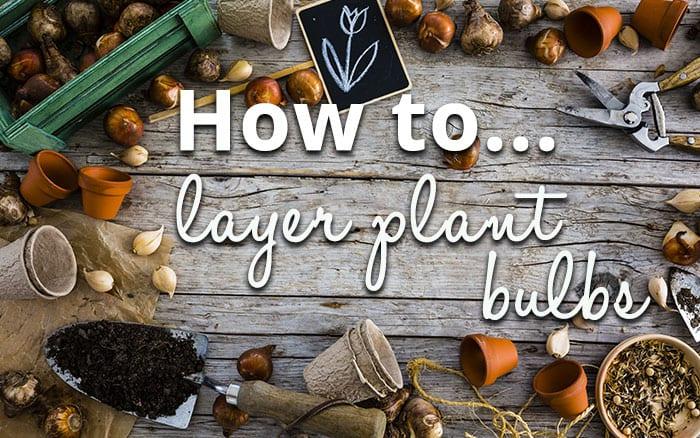 layer-planting-header2
