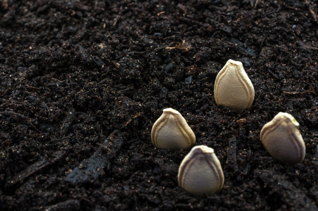 where to plant pumpkin seeds