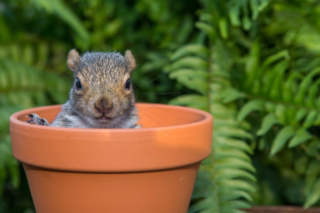 Flowering bulbs faqs david domoney - How to keep squirrels from digging in garden ...